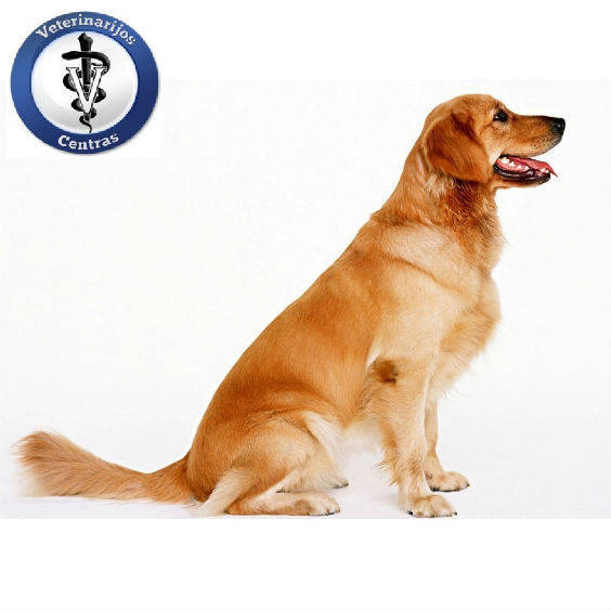 Dogs dogs 16762076 1024 768a